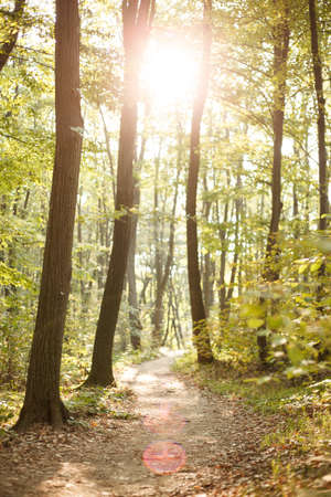 Footpath winding through lush green forest. Early morning in nature. Standard-Bild
