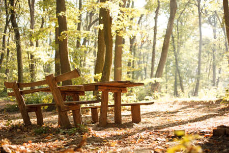 Wooden picnic table and benches bathing in early morning sunshine in lush green forest