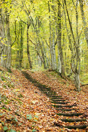 Old steps on a hillside in autumn colored forest.