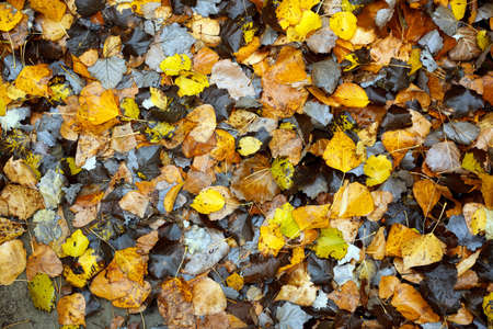 High angle view of autumn colored leaves lying on the ground Standard-Bild