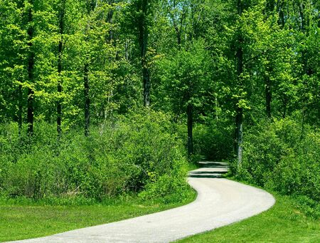 Curved pathway leads deep into the forest Stock Photo