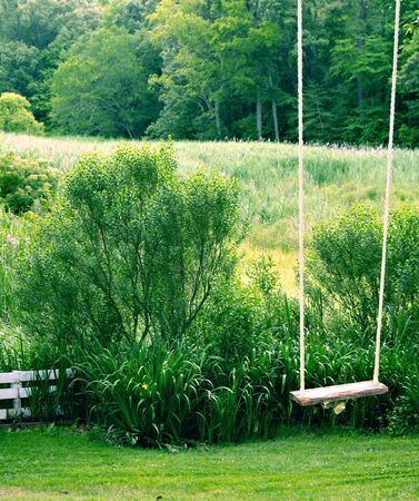 A wooden swing hangs in front of a marshy meadow, waiting for a rider