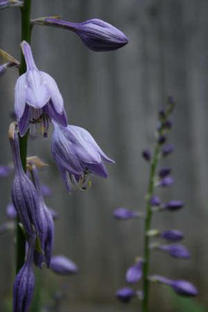 rule of thirds: Purple flowers