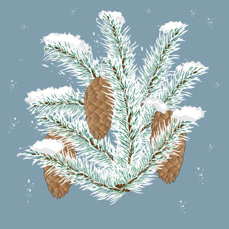 spruce branch with cones isolated, background, winter Illustration