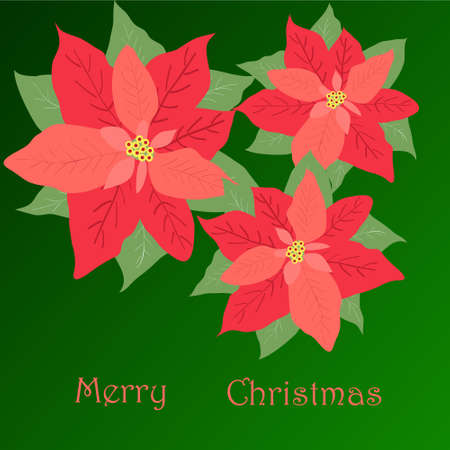 simplified: poster merry Christmas, three poinsettias on green background with the inscription, puansetiya, Christmas star, Christmas symbol