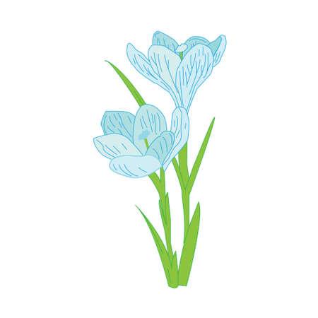 spring primroses, delicate Crocus