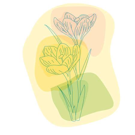 primroses: spring primroses, delicate Crocus