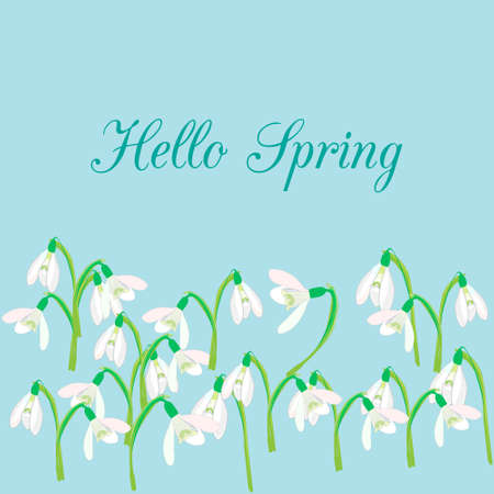 snowdrops: Snowdrops on a blue background. Spring illustration. background with snowdrop. Background with flower. Illustrations of flowers. Spring background