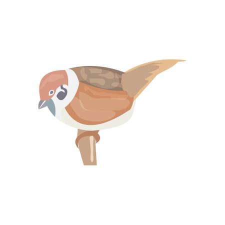 sparrow bird: Sparrow, town Sparrow bird, illustration, Sparrow lives near people