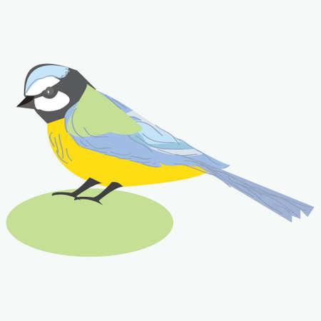 tit bird: Tit bird. Titmouse. illustration of a titmouse bird, isolated on white background.