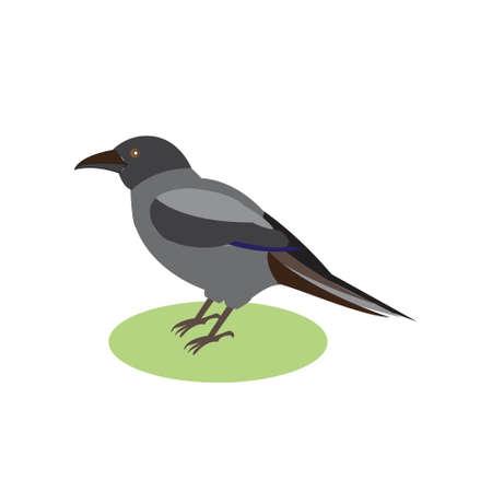 black raven: Black Raven, a magical bird, illustration of a black crow