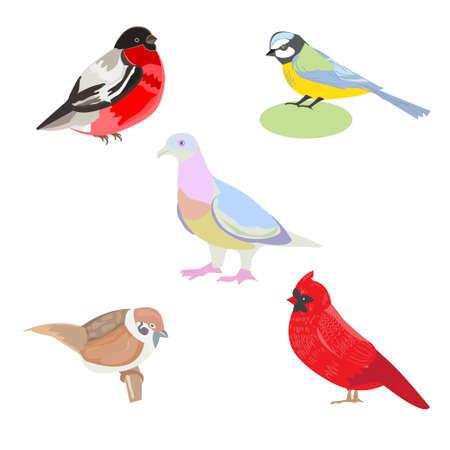 titmouse: illustration of a set of images of birds, illustration birds - titmouse, red cardinal, Sparrow, pigeon, bullfinch, card design, leaflets, postcards