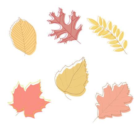 Autumn Leaves on white background , vector illustration Illustration