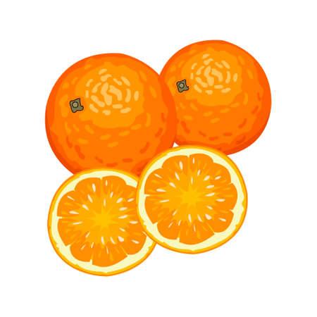 Vector illustration of fresh oranges