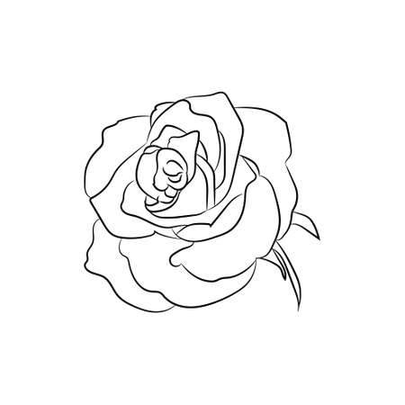 A delicate white rose on a blue background vector illustration black and white sketch of rose flower black and white vector illustration mightylinksfo