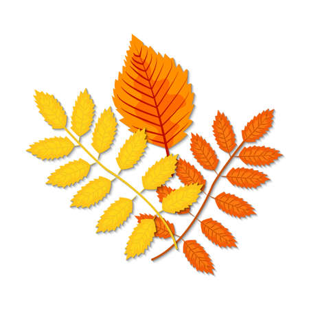 Autumn leaves (maple, oak, birch, chestnut and other plants) of various colors. Vector illustration.