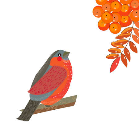 Bright little bullFinch sits up and looks at the berries and leaves of the orange of Rowan , vector illustration