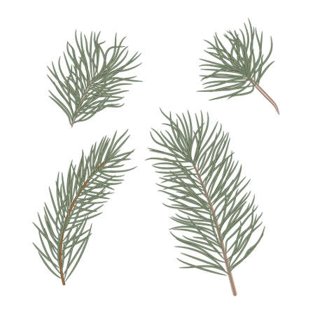 Christmas tree branches set for Christmas decor. Branches close-up. Collection of pine branches. Vector set of christmas graphic elements. Merry Christmas design for invitation and greeting card, prints and posters. Hand drawn winter plants