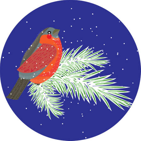 Vector composition with bullfinch bird on conifer branches. Winter design element for christmas, new year, greeting card. Can be used for poster, web page, packaging