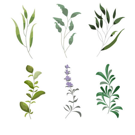 Vector designer elements set of green forest fern, tropical green eucalyptus greenery art foliage natural leaves herbs in watercolor style. Decorative beauty elegant illustration for design, wedding and invitation cards Illustration