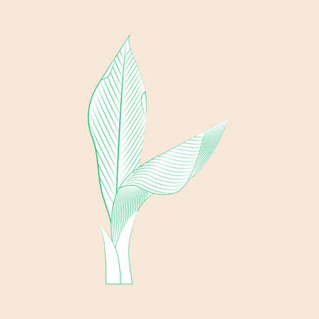 Leaves of exotic tropical plants. Fashionable tropical design for textiles. Drawing in the style of engraving. Vector illustration.