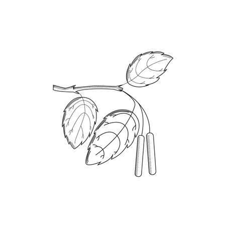 Birch branch in the style of engraving on a white background. Vector illustration Illustration
