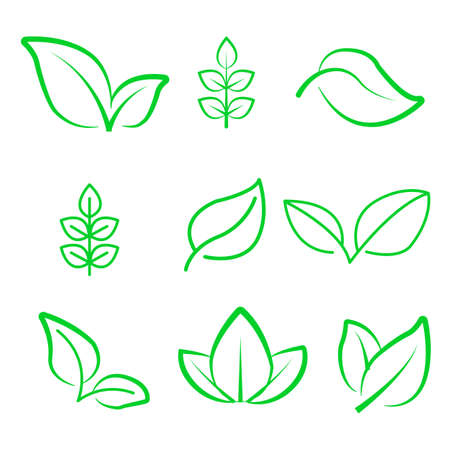 Natural leaf line icon. Young leaves of plants, forest tree oak, elm and ash leafs and eco green, garden vector isolated outline leafs symbol set