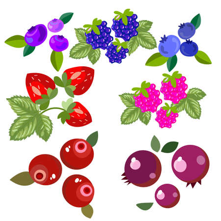 Set of forest and garden berries. Bright, beautiful and delicious fruits, for the design of postcards, banners, labels. Vector illustration Vecteurs