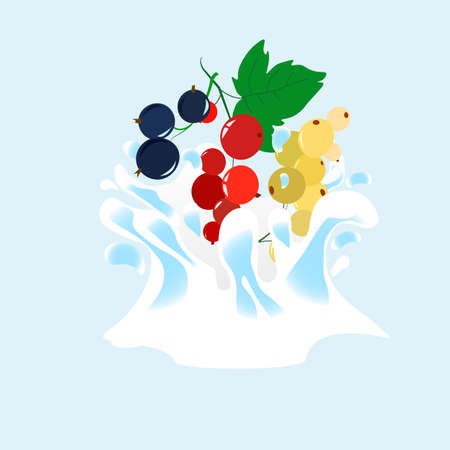 The surge and drop, the movement of liquids, black currant, red and white currants. Splattered with juice and yogurt, drops and stains. Abstract vector illustrations Illustration