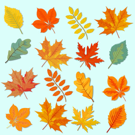Bright, colorful, autumn leaves, the last beauty of the past summer, autumn symbol, vector illustration