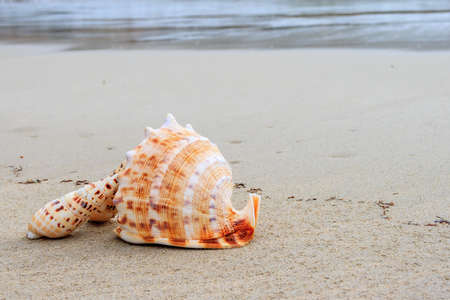 Beautiful shells on the beach waiting the summer Stock Photo