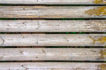 green vegetation: Wood background with green vegetation