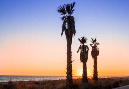 Three palms on the beach in sunset Stock Photo