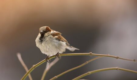 Telephoto of sparrow in nature