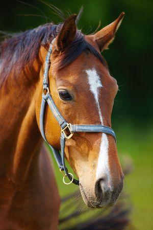Un beau cheval dans la campagne  Banque d'images - 3113246