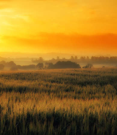 Early morning in the countryside - Denmark 写真素材