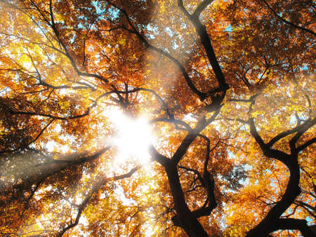 setting sun: A forest dressed in the colors of autumn