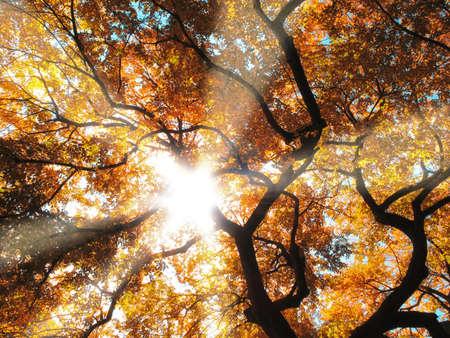 warm colors: Un bosque vestidos con los colores de oto�o