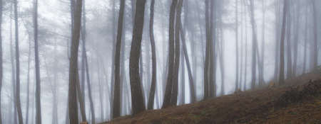 january sunrise: Temprano en la ma�ana niebla en el bosque al amanecer