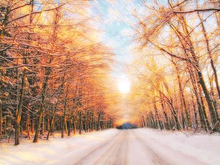 Puesta de sol en invierno - bosque, por carretera y cálido color  Foto de archivo