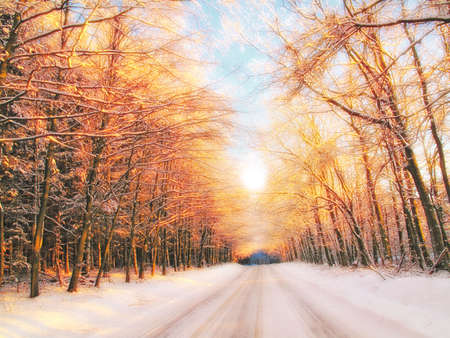 winter tree: Sunset in winter - forest, road and warm color Stock Photo