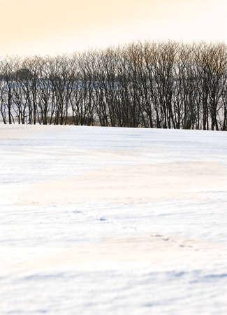 Winter panorama - countryside in wintertime photo