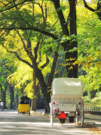hackney carriage: Central Park in early spring - horse carriage