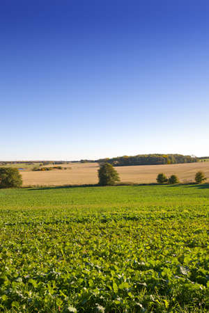 Lush green farmland in early springtime  photo