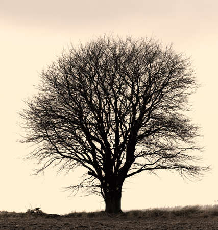A concept photo of a lonely tree - lots of copyspace photo