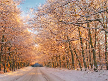 Sunset in winter - forest, road and warm color Stock Photo - 7352257