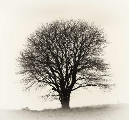 lone tree: A very sharp and detailed photo of a lonely tree on a field
