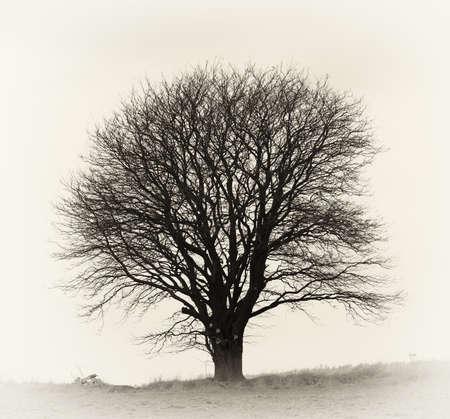 arboles blanco y negro: Una foto muy fuerte y detallada de un �rbol solitario en un campo  Foto de archivo