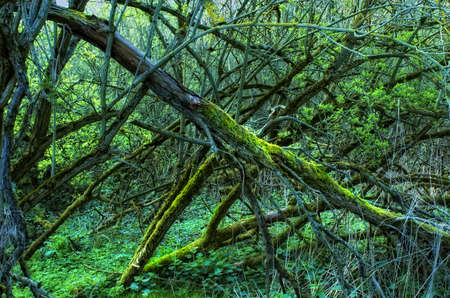 A photo of wild and dark sump forest wilderness Stock Photo - 7464217
