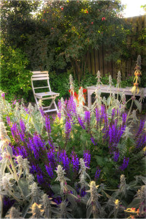 Beautiful garden at sunset - flowers and furniture photo